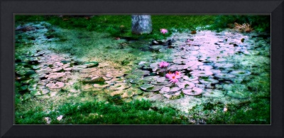 Light on the Lilies