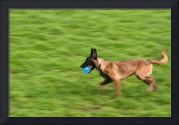 panning dog with blue ball