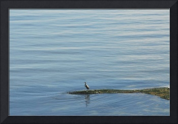 Heron on the ocean