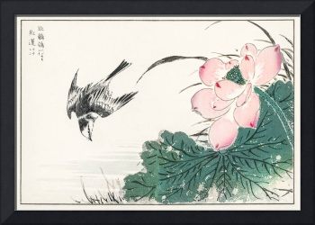 Japanese Pied Wagtail and Red Lotus by Numata Kash