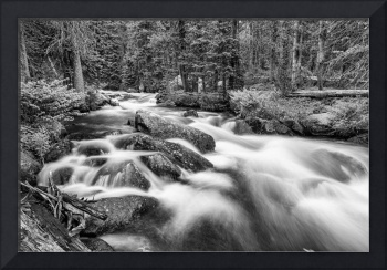Roosevelt National Forest Stream Black and White