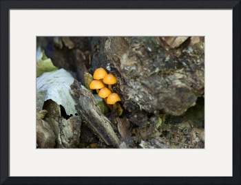 Mushrooms On a Stump by D. Brent Walton