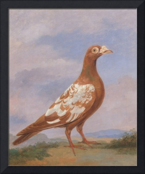 Dean Wolstenholme~Red pied carrier