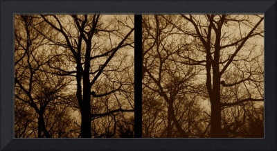 stereo pair trees 3D  black and white photo