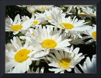 Daisy Flowers Art Prints Daisies Bouquet Garden