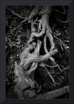 Gnarled Roots 2