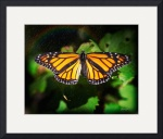 Butterfly and Rainbow by John Corney