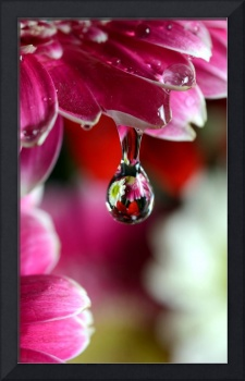 Reflecting in Water Drop