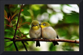 South American Yellow Finches