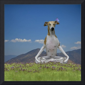Whippet dog meditating yoga practice on mountain