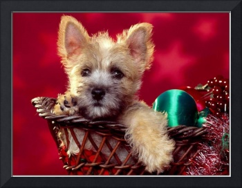 Adorable Christmas Time Terrier Puppy Dog
