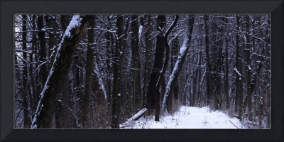 taylorsville winter path panoramic z
