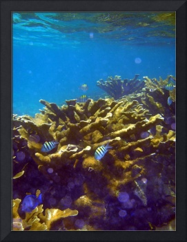 Belize Barrier Reef and Surface
