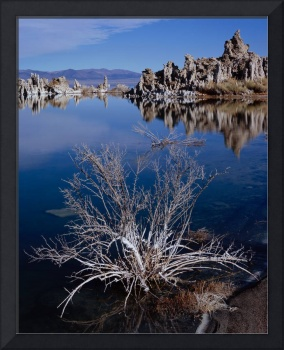 Mono Lake Salt Bush