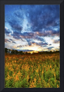Goldenrod and October Sky by Jim Crotty