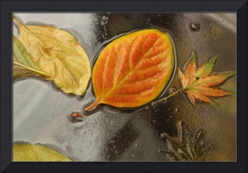 persimmon leaves on glass after rain