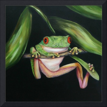 Red Eyed Tree Frog #3