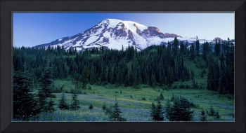 Panorama of Mount Rainier with wildflower meadow