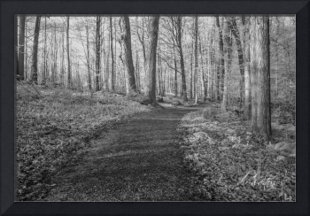 Sacred Grove Infrared