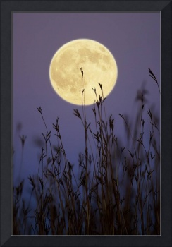 Hunters Moon 2 by Jim Crotty