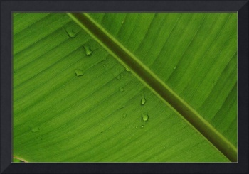 Rainforest Leaf, Amazon Jungle