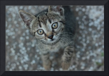 It's looking at you, little cute cat