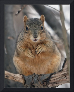 One Chubby Squirrel