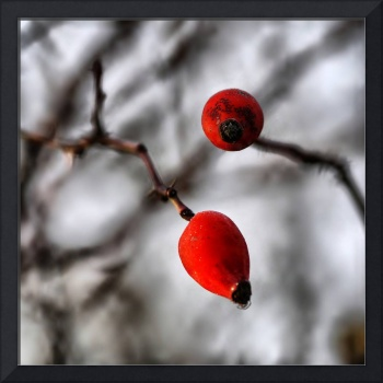 Two Rosehip Berries