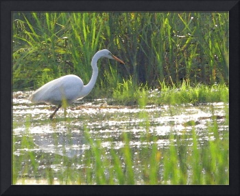 Egret Hunting by LAMeyer