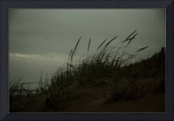 Sea Grass and Sand Dunes