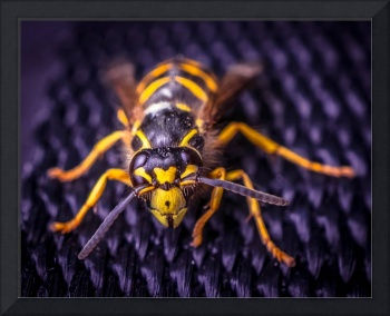 Yellow jacket wasp
