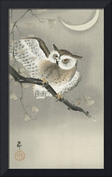 Long-Eared Owl in a Ginkgo Tree by Ohara Koson