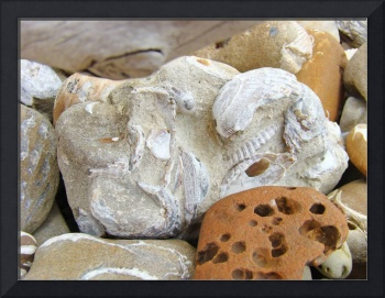 Coastal Beach Fossils Shells Art Prints Rocks