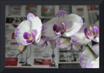 Orchids with Vacuum Cleaners