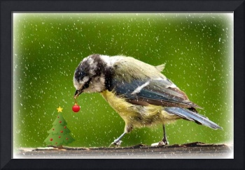 great tit - christmas card