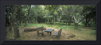 Empty table and benches in a forest