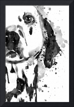 Black And White Half Faced Dalmatian Dog