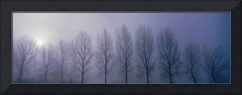 Trees in Mist Damme Belgium