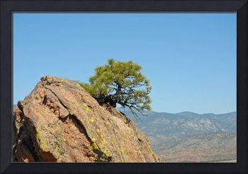 Shrub and Rock at Canon City