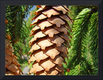 Golden Pine Cone Fine Art Photography Baslee