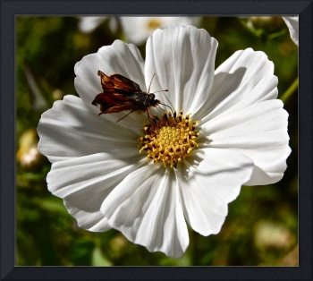 Insect on White