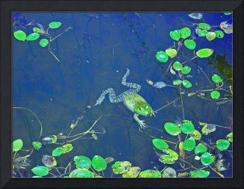 Frog lily pads