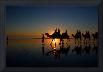 Camels on Cable Beach 2