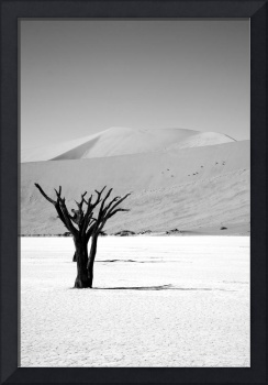 Lonely Desert Tree