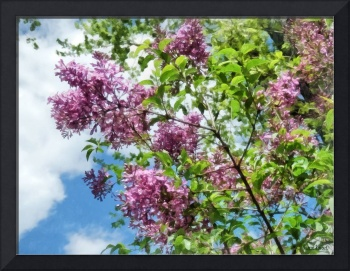 Lilacs and Clouds
