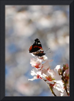 Butterfly on an Almond Blossom I
