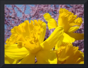 Spring Art Daffodil Flowers Pink Blossoms Fine Art
