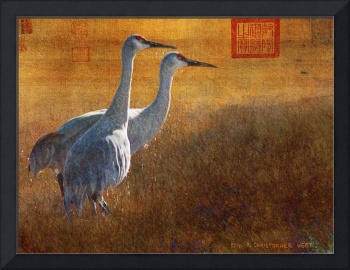 sunset in the marsh / sandhill cranes