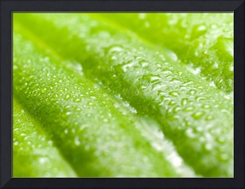 Wet green leaf.