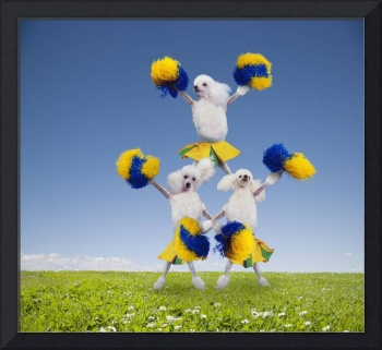 Poodle-Cheerleaders
